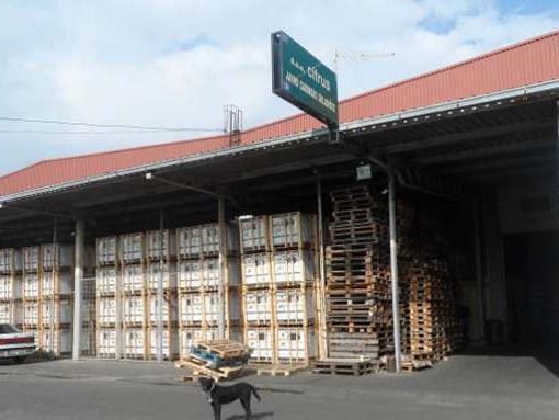 Novi Sad- Proizvodno skladišna hala ELNOS - slika 2
