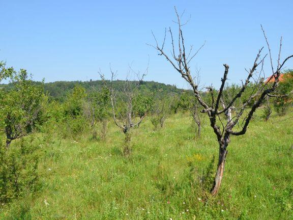Poljoprivredno zemljište od 65ari, Orašački put, Aranđelovac