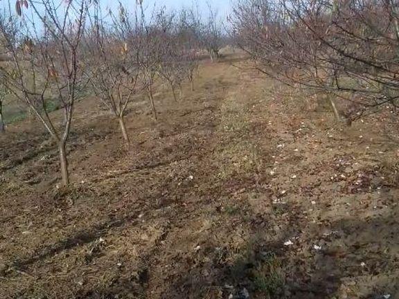 Prodajem vocnjak sa izlazom na Dunav u Ritopeku