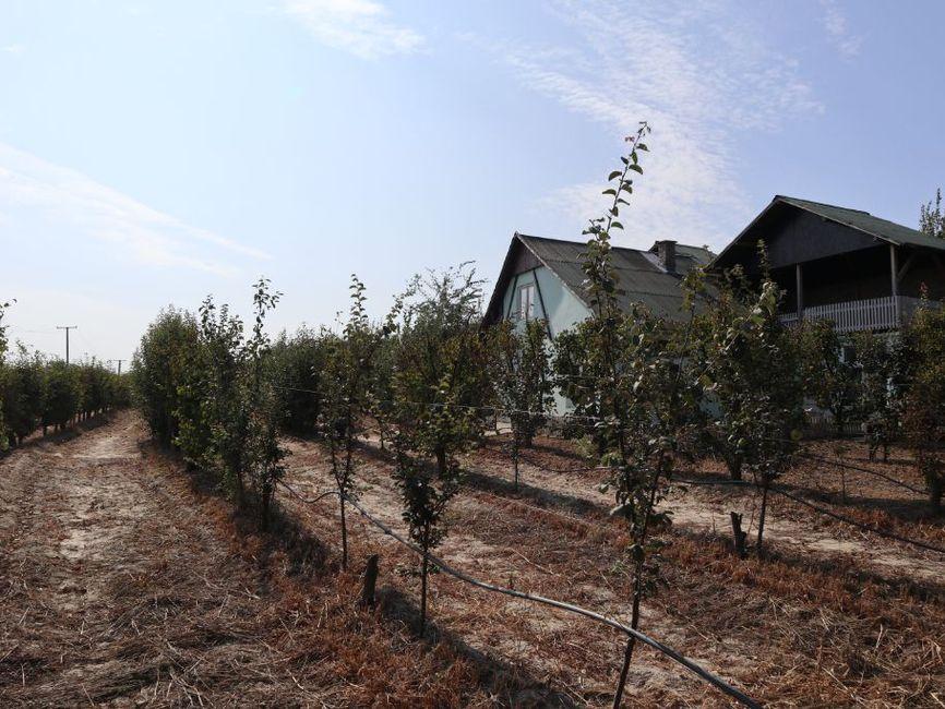 Voćnjak sa kućom u Bačkoj Topoli